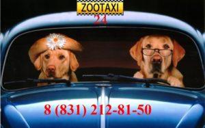 зоо такси